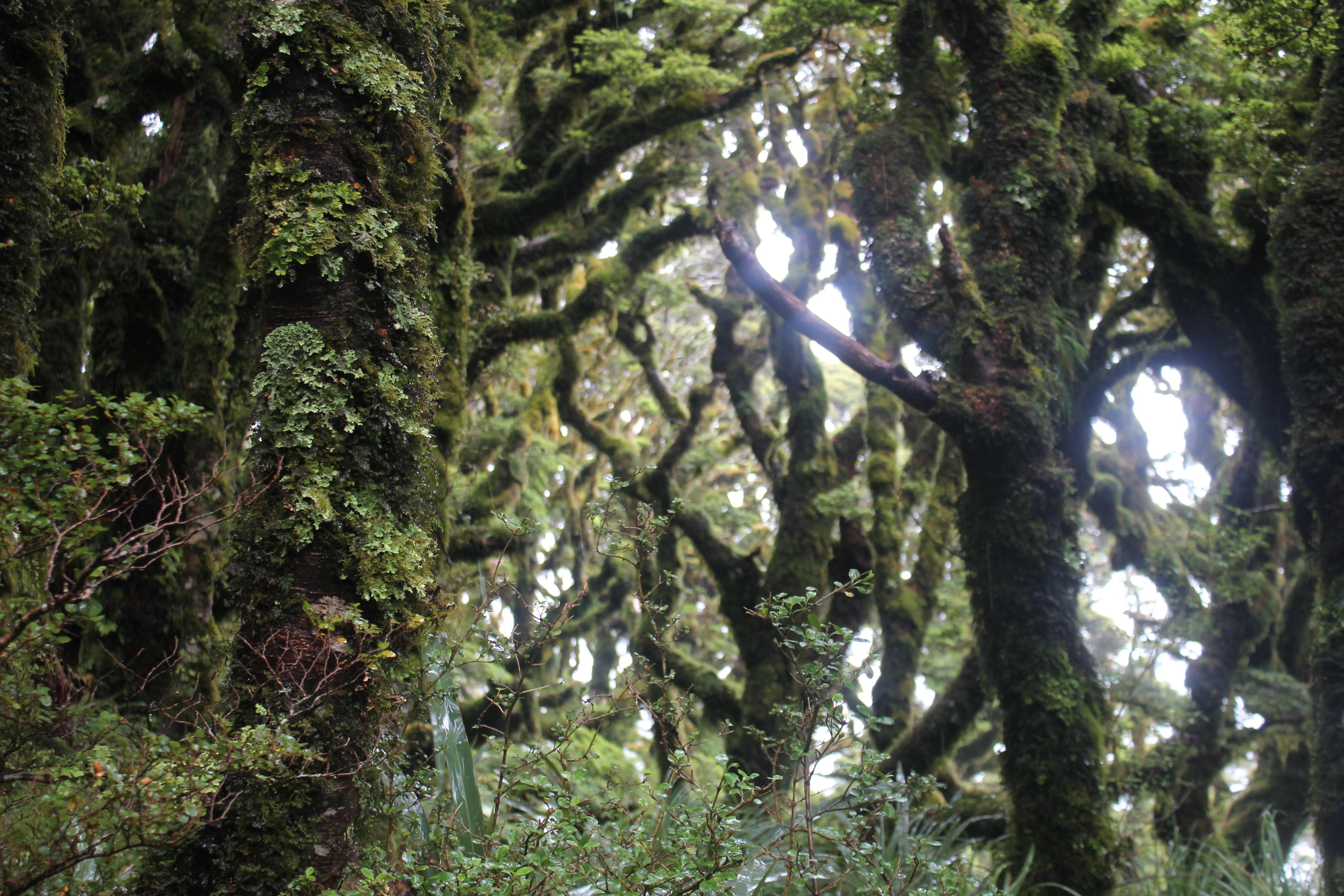 Les maes l envers lesmaesalanver - Mousse sur les arbres ...